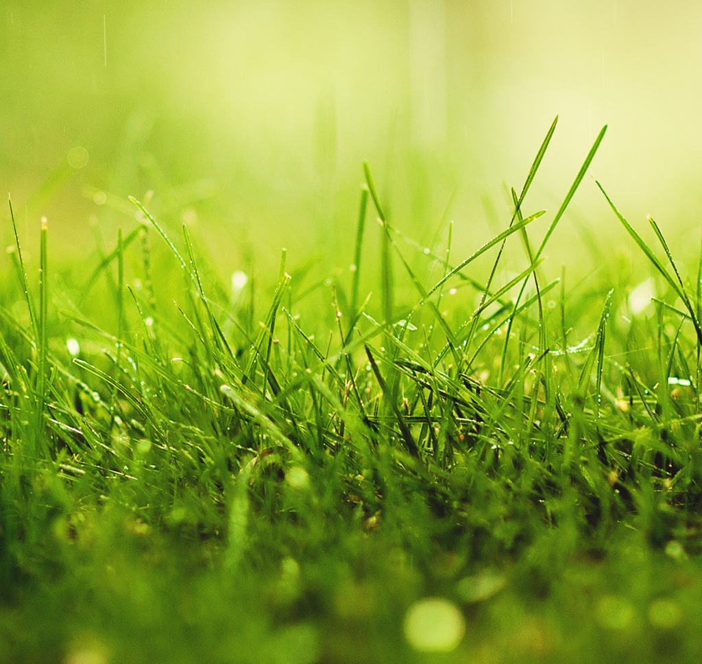 Will too much rain hurt my grass? - Lawn & Garden